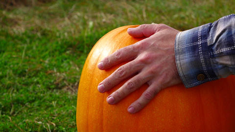 Man put palm over ripe pumpkin, tap by fingers, slow motion shot GIF