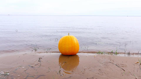 Ripe orange pumpkin lie on wet sand at lake shore, little water waves plash Footage