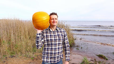 Man pose with large orange pumpkin, playful listen what inside plant Live Action