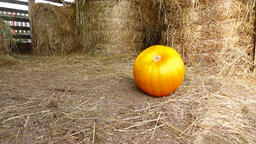 Good orange pumpkin roll at hayloft floor and stop, slow motion shot Live Action