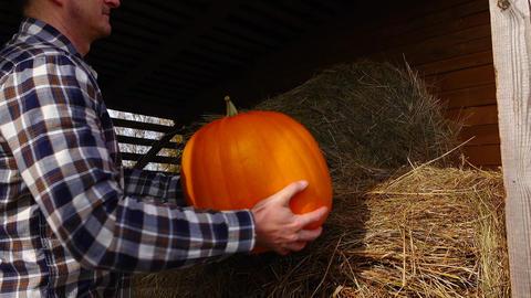Man put ripe vivid orange pumpkin at hay loft, on dry haymow Footage