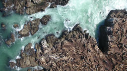 Aerial Flight Over A Seal Covered Island Filmmaterial