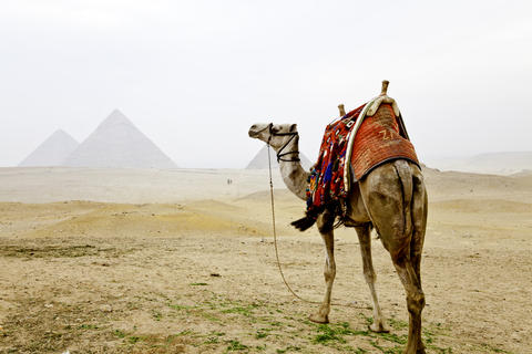 A camel and The Pyramids of Giza フォト
