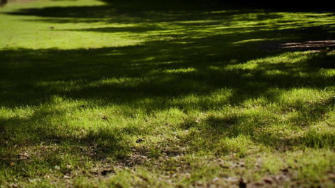 Shadows pass over green grass timelapse Footage