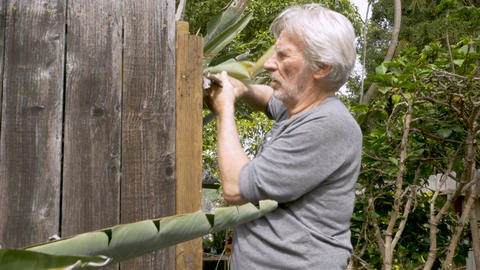 Active healthy senior man removing a nail from a broken fence with a lock wrench Footage