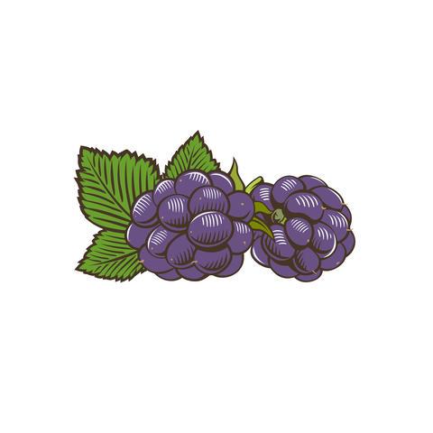 Blackberry in vintage style Fotografía