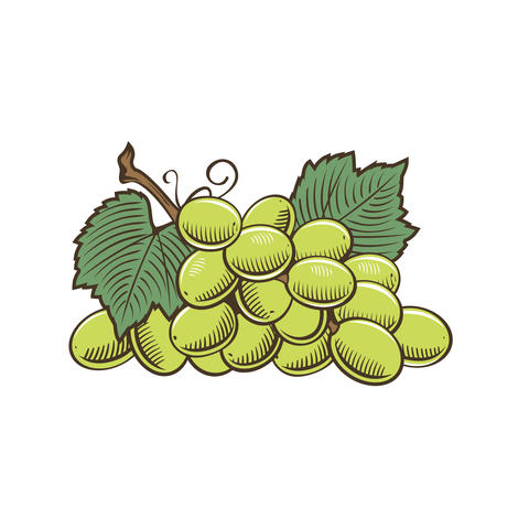 Grapes in vintage style Foto