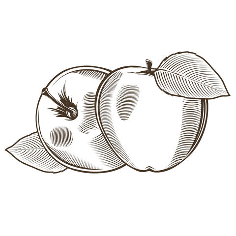 Apples in vintage style フォト