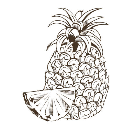 Pineapple in vintage style フォト