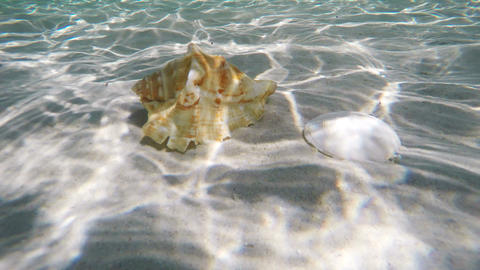 Seashell under water Footage