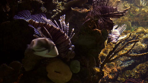 4K, Colorful Fishes, Seahorses, Corals, Marine Life, Underwater World Footage