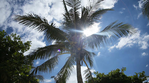 Coconut tree under blue sky and bright sun Footage