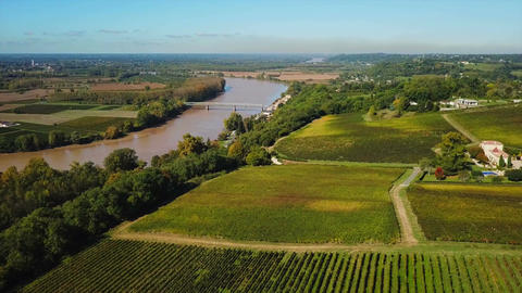 Aerial view bordeaux vineyard, landscape vineyard south west of france ビデオ