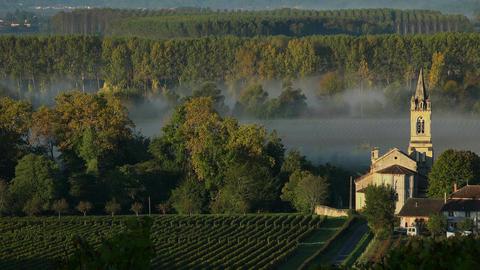 Vineyard landscape-Vineyard south west of France-Sauternes-Loupiac-Time lapse Footage