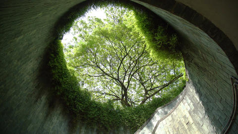 Tree tunnel in summer at park Image