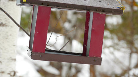 Bird feeder in the park Footage
