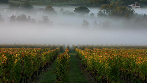Vineyard landscape-Vineyard south west of France, Sauternes Footage