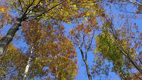 Fir trees 画像