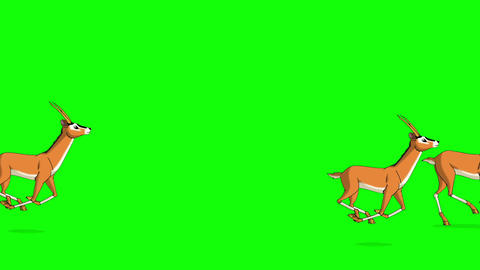 Herd of Antelopes or Gazelles Runs Chroma Animation