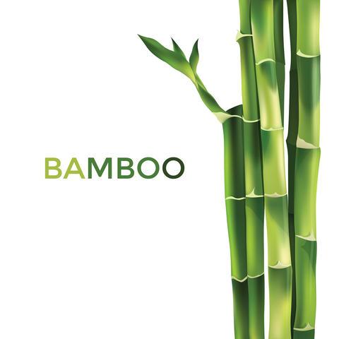 Bamboo Illustration Foto