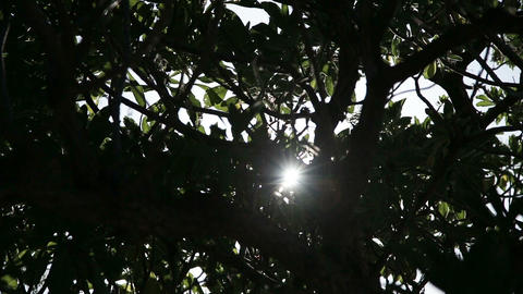 The sun through trees Footage