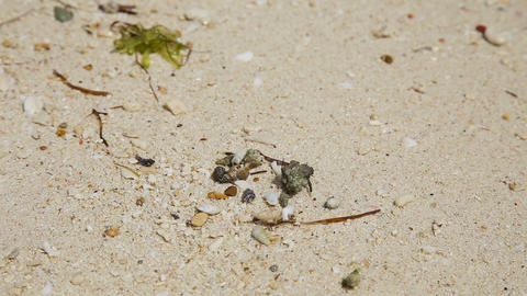 Small hermit crab in the sand Footage