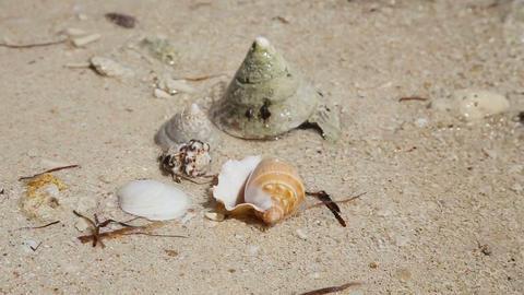 Seashells on the sand beach Footage