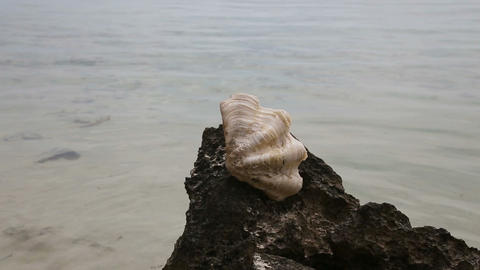 Big shell on a rock Footage