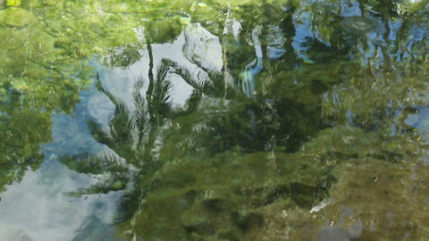 Coconut trees reflected in the water Footage