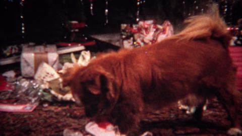 1956: Dog opens Christmas gift ripping open newspaper wrapping Live Action