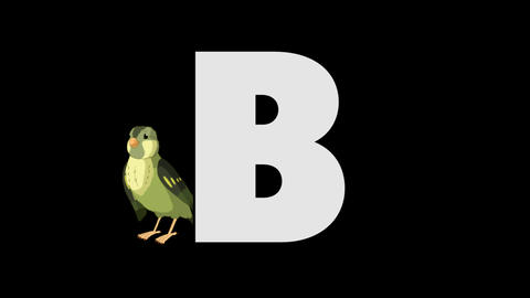 Letter B and Bird (background) Animation