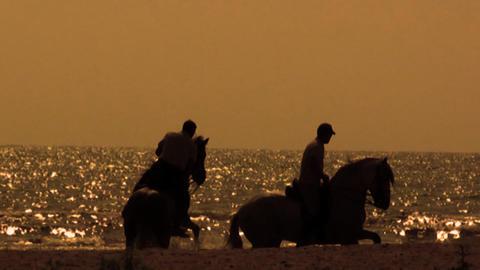 Horses ビデオ