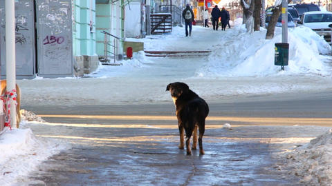 Stray dog on a city street Filmmaterial