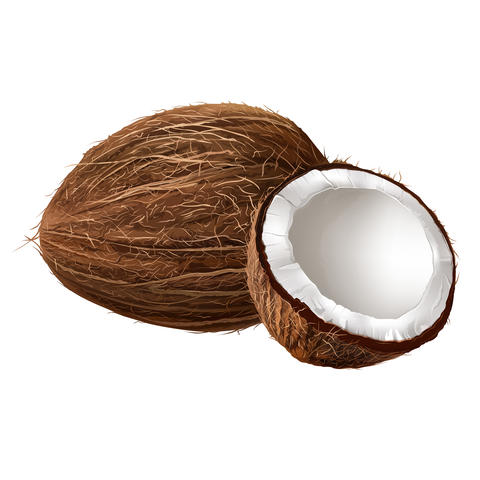 Coconut on white background フォト