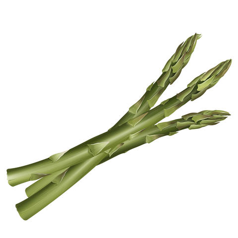 Asparagus on white background フォト