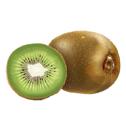 Kiwi on white background フォト