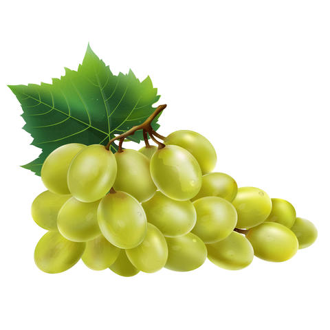 Grapes on white background フォト