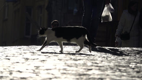Cat walks across brightly-lit road Footage
