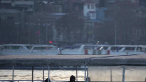 Bird Soars Near Boat in Port Footage