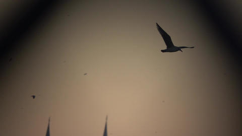 Bird Flies Through Light and Dark Footage