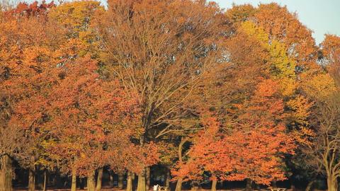Autumn Leaves / Fall Colors / Trees / Park- Fix ビデオ
