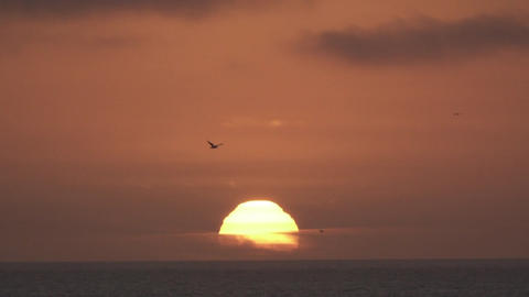 Ocean Sunset with Soaring Bird Footage