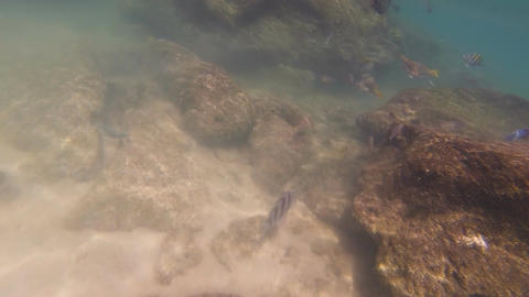 Underwater In The Gulf Of Mexico: Version #7 stock footage