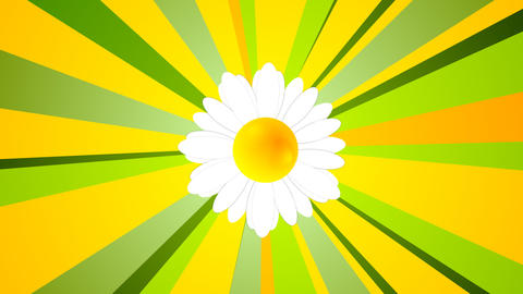 Summer video animation with camomile and beams Animation