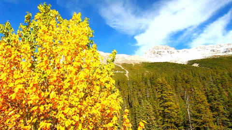 Banff National Park Fall Colors Footage