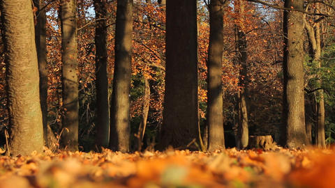 Fallen Leaves / Autumn Colors / Low Angle / Bokeh - Fix Footage