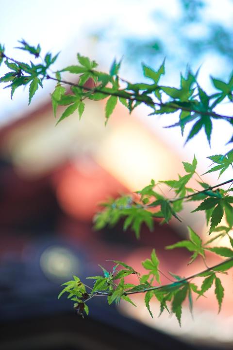 Beautiful Japanese garden in Tokyo, Japan Fotografía