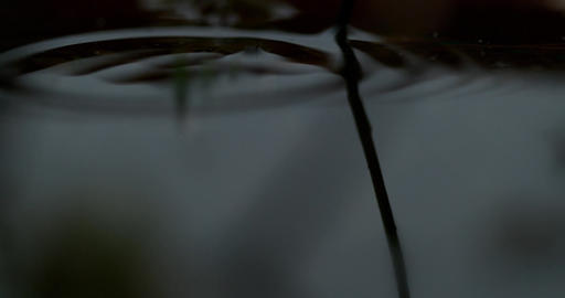 Drop Creates Ripples in Water Footage