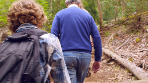Seniors and grandchildren walking through forest, back view Footage