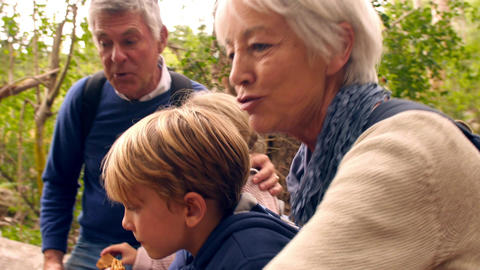 Senior adults with grandchildren eating outdoors in a forest Stock Video Footage